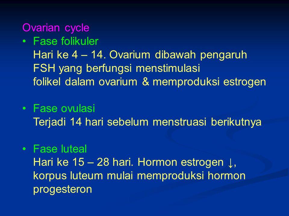 Ovarian cycle Fase folikuler Hari ke 4 – 14. Ovarium dibawah pengaruh FSH yang berfungsi menstimulasi folikel dalam ovarium & memproduksi estrogen Fas