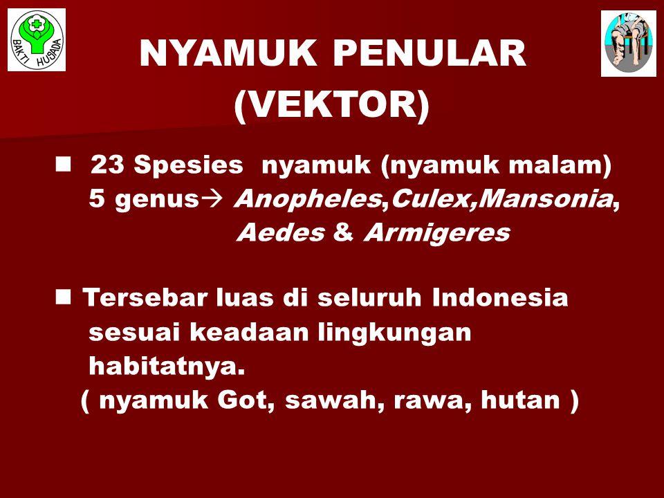 23 Spesies nyamuk (nyamuk malam) 5 genus  Anopheles,Culex,Mansonia, Aedes & Armigeres Tersebar luas di seluruh Indonesia sesuai keadaan lingkungan ha