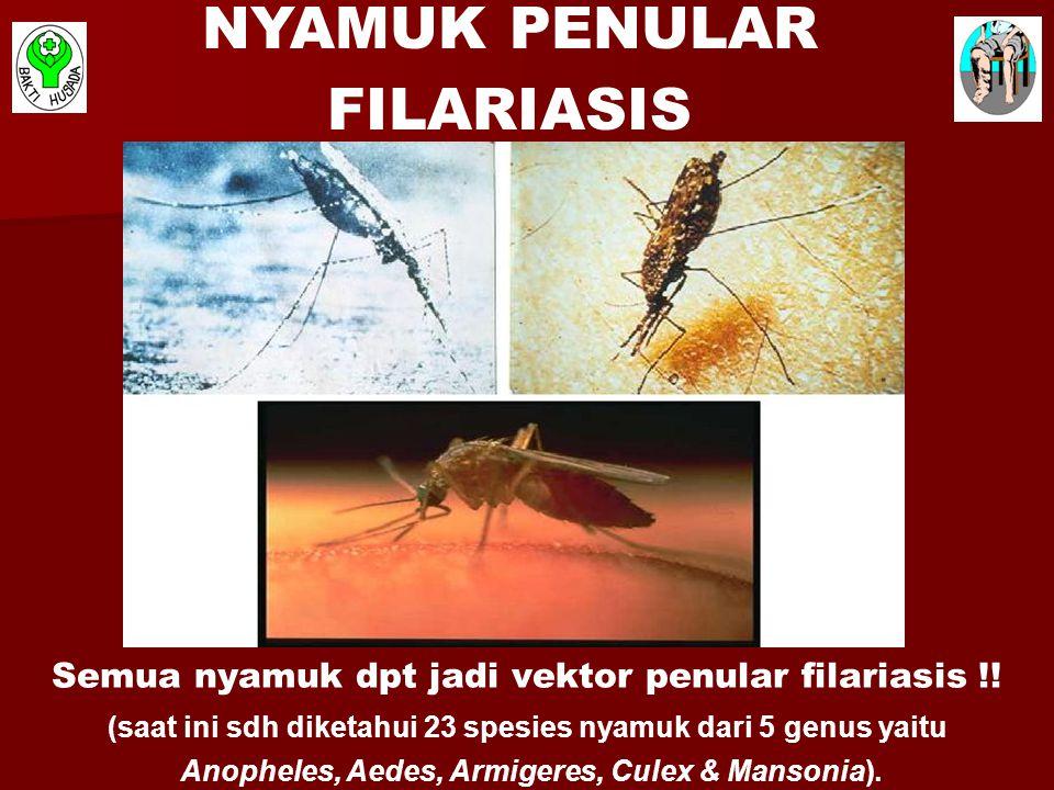 (saat ini sdh diketahui 23 spesies nyamuk dari 5 genus yaitu Anopheles, Aedes, Armigeres, Culex & Mansonia). Semua nyamuk dpt jadi vektor penular fila