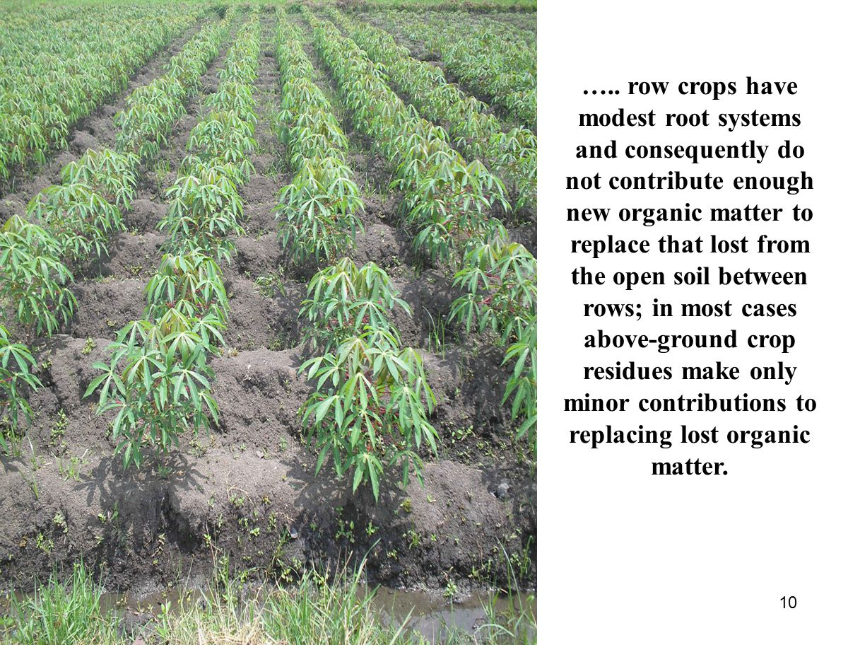 10 ….. row crops have modest root systems and consequently do not contribute enough new organic matter to replace that lost from the open soil between
