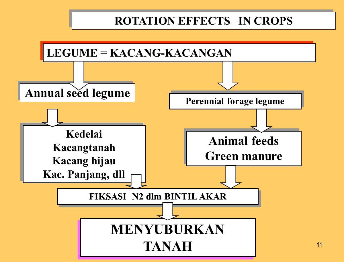 11 ROTATION EFFECTS IN CROPS LEGUME = KACANG-KACANGAN Annual seed legume Perennial forage legume Kedelai Kacangtanah Kacang hijau Kac. Panjang, dll Ke