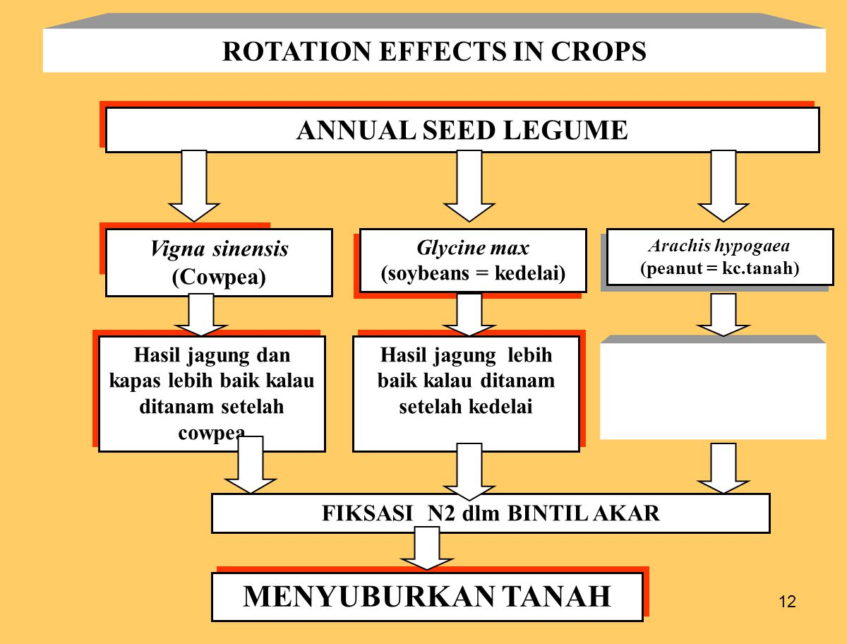 12 ROTATION EFFECTS IN CROPS ANNUAL SEED LEGUME Vigna sinensis (Cowpea) Glycine max (soybeans = kedelai) Glycine max (soybeans = kedelai) Hasil jagung