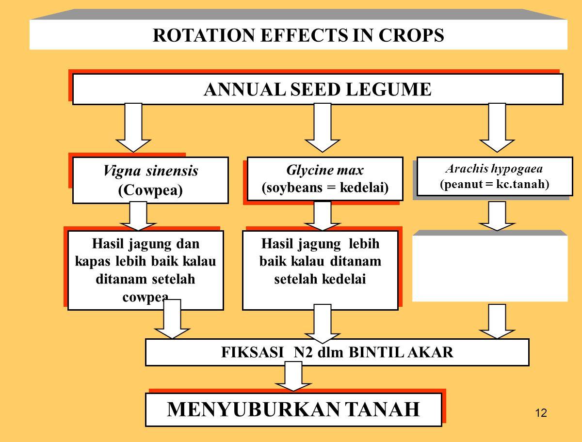 12 ROTATION EFFECTS IN CROPS ANNUAL SEED LEGUME Vigna sinensis (Cowpea) Glycine max (soybeans = kedelai) Glycine max (soybeans = kedelai) Hasil jagung dan kapas lebih baik kalau ditanam setelah cowpea Hasil jagung lebih baik kalau ditanam setelah kedelai FIKSASI N2 dlm BINTIL AKAR MENYUBURKAN TANAH Arachis hypogaea (peanut = kc.tanah) Arachis hypogaea (peanut = kc.tanah)