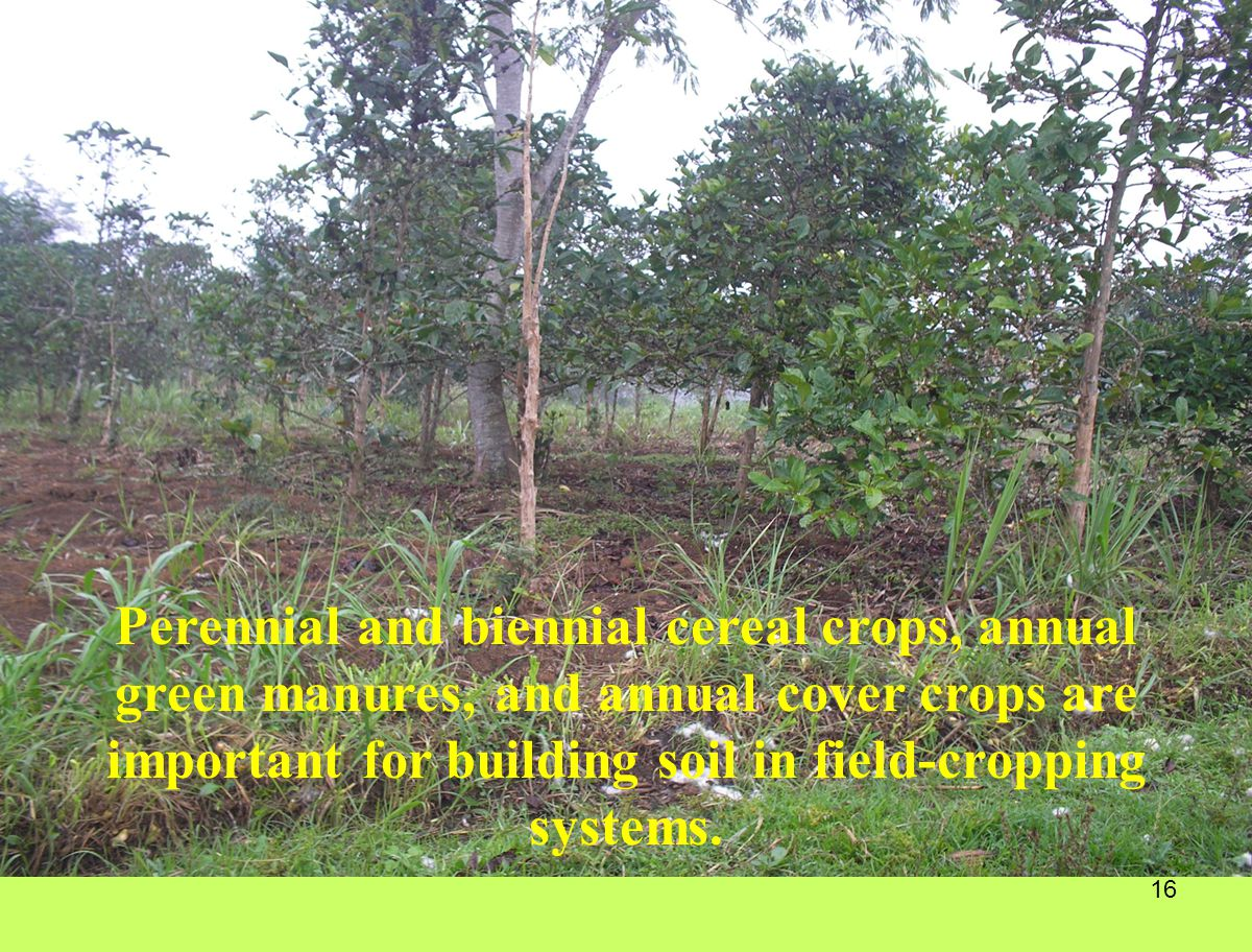 16 Perennial and biennial cereal crops, annual green manures, and annual cover crops are important for building soil in field-cropping systems.