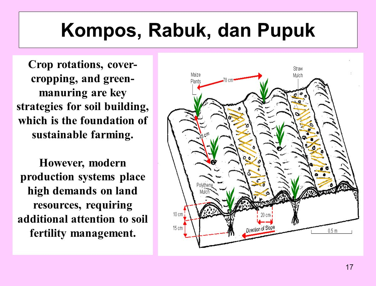 17 Kompos, Rabuk, dan Pupuk Crop rotations, cover- cropping, and green- manuring are key strategies for soil building, which is the foundation of sustainable farming.
