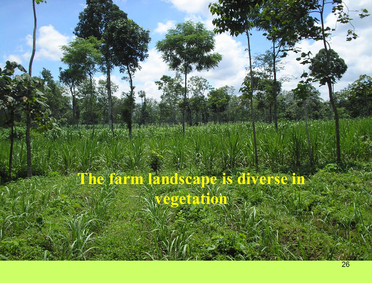 26 The farm landscape is diverse in vegetation