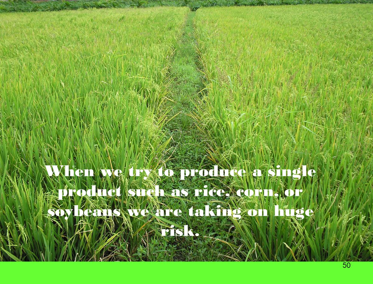 50 When we try to produce a single product such as rice, corn, or soybeans we are taking on huge risk.