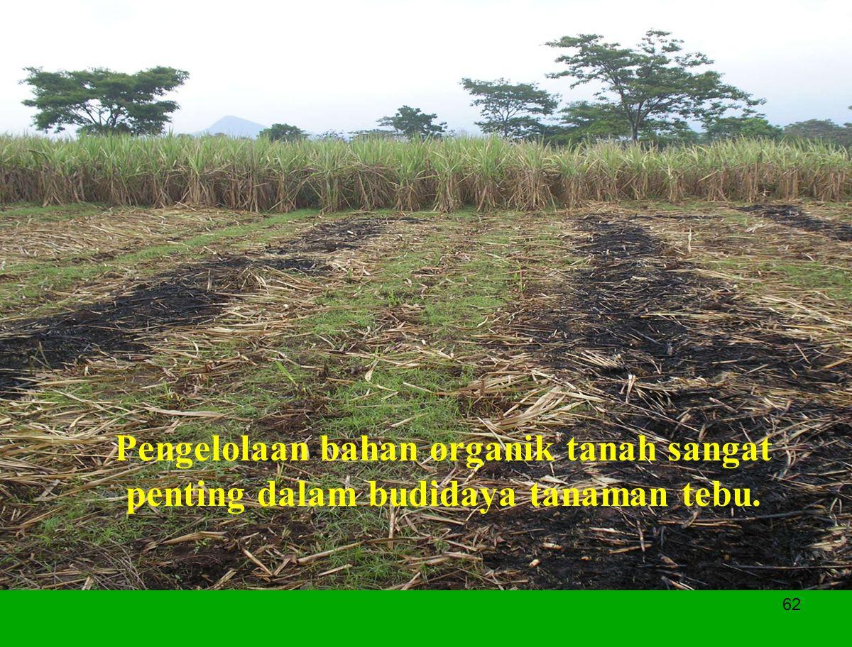 62 Pengelolaan bahan organik tanah sangat penting dalam budidaya tanaman tebu.