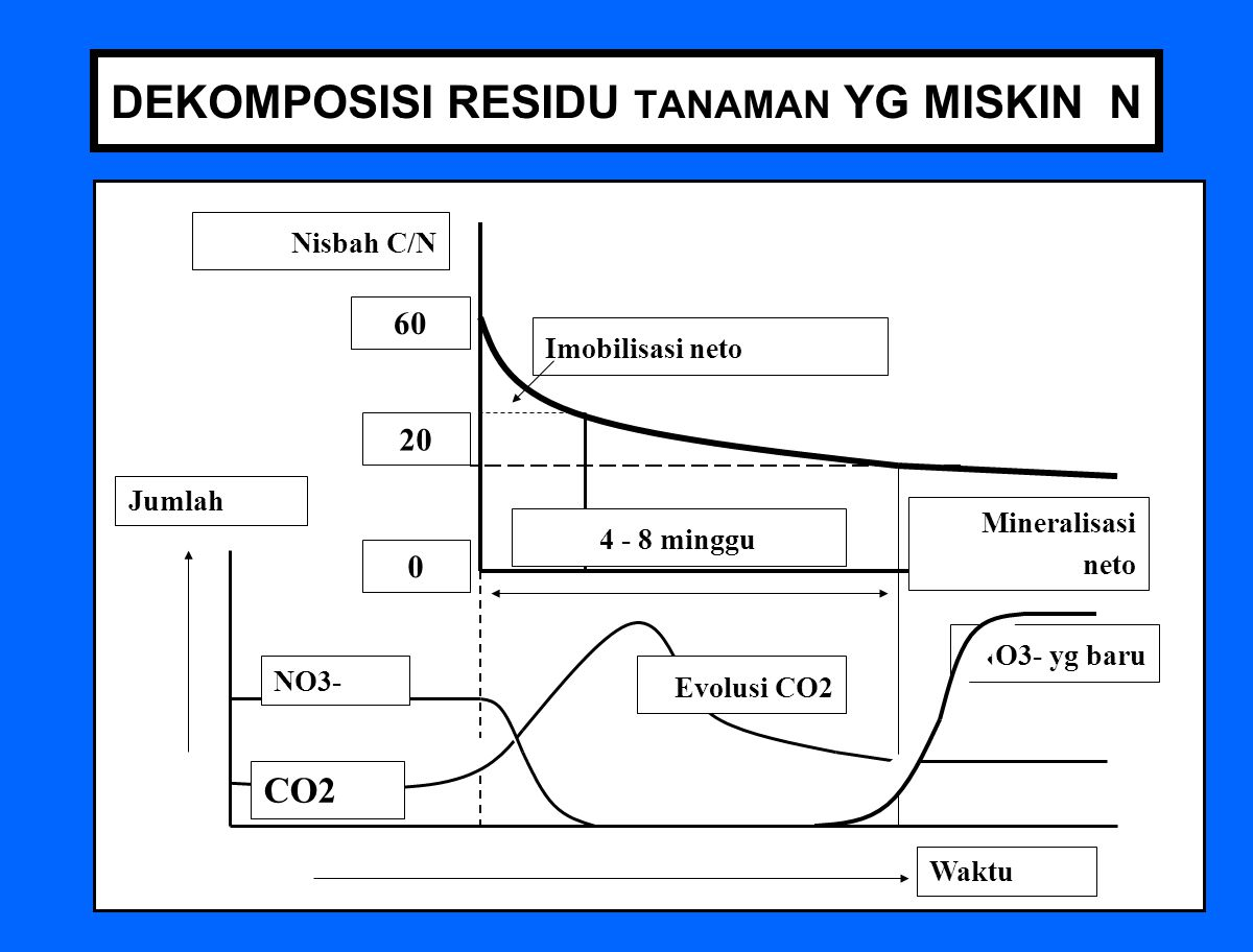 63 DEKOMPOSISI RESIDU TANAMAN YG MISKIN N Jumlah Waktu CO2 NO3- NO3- yg baru Evolusi CO2 Mineralisasi neto Imobilisasi neto Nisbah C/N 60 0 20 4 - 8 minggu