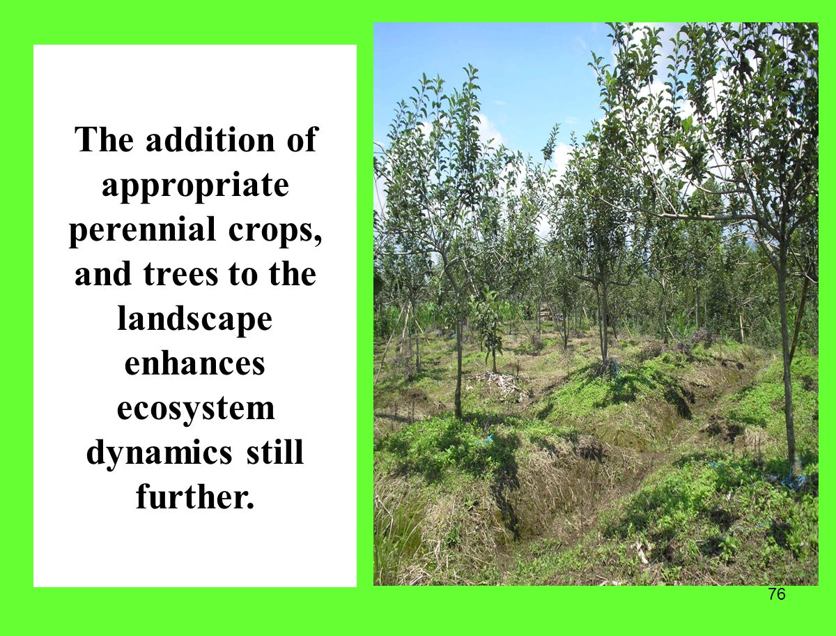 76 The addition of appropriate perennial crops, and trees to the landscape enhances ecosystem dynamics still further.