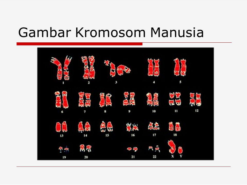 Gambar Kromosom Manusia
