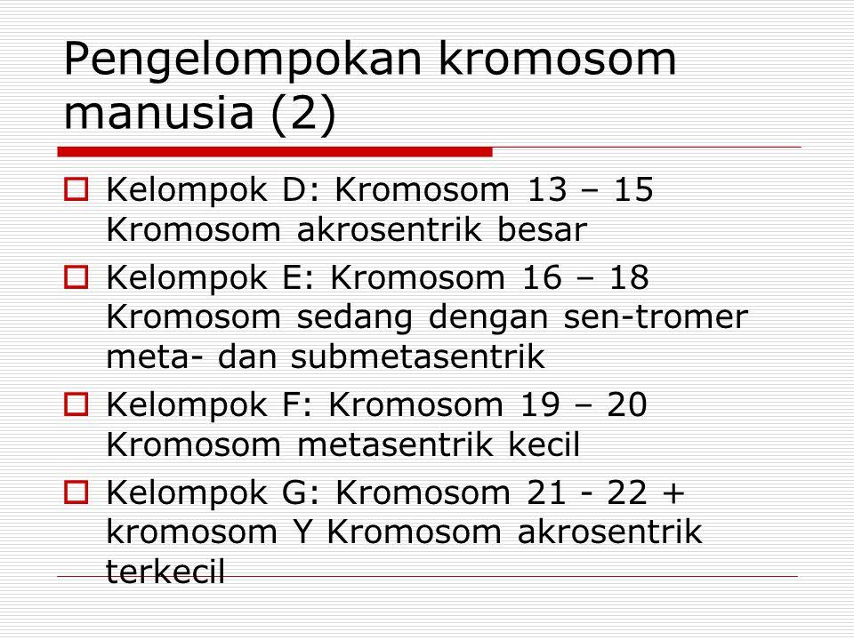 Pengelompokan kromosom manusia (2)  Kelompok D: Kromosom 13 – 15 Kromosom akrosentrik besar  Kelompok E: Kromosom 16 – 18 Kromosom sedang dengan sen-tromer meta- dan submetasentrik  Kelompok F: Kromosom 19 – 20 Kromosom metasentrik kecil  Kelompok G: Kromosom 21 - 22 + kromosom Y Kromosom akrosentrik terkecil