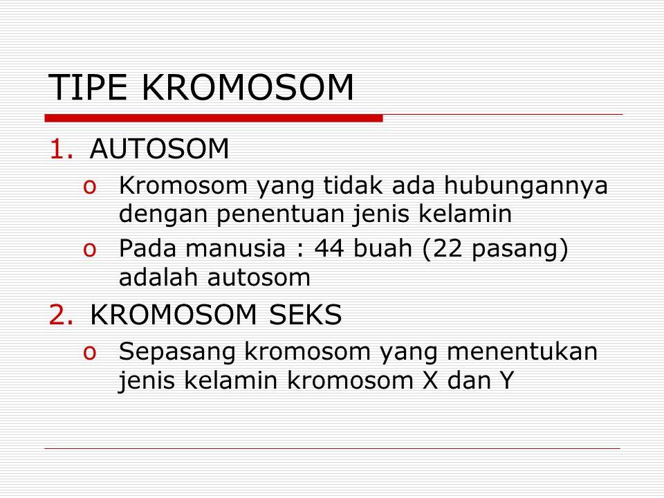 TIPE KROMOSOM 1.AUTOSOM oKromosom yang tidak ada hubungannya dengan penentuan jenis kelamin oPada manusia : 44 buah (22 pasang) adalah autosom 2.KROMOSOM SEKS oSepasang kromosom yang menentukan jenis kelamin kromosom X dan Y