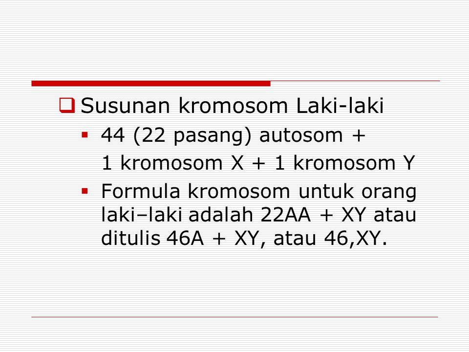  Susunan kromosom Laki-laki  44 (22 pasang) autosom + 1 kromosom X + 1 kromosom Y  Formula kromosom untuk orang laki–laki adalah 22AA + XY atau ditulis 46A + XY, atau 46,XY.