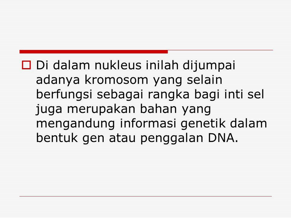  Di dalam nukleus inilah dijumpai adanya kromosom yang selain berfungsi sebagai rangka bagi inti sel juga merupakan bahan yang mengandung informasi genetik dalam bentuk gen atau penggalan DNA.