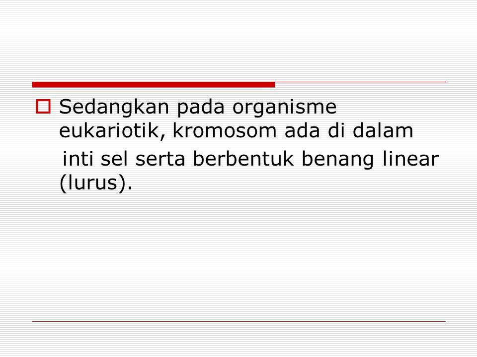MORFOLOGI KROMOSOM (3) 4.