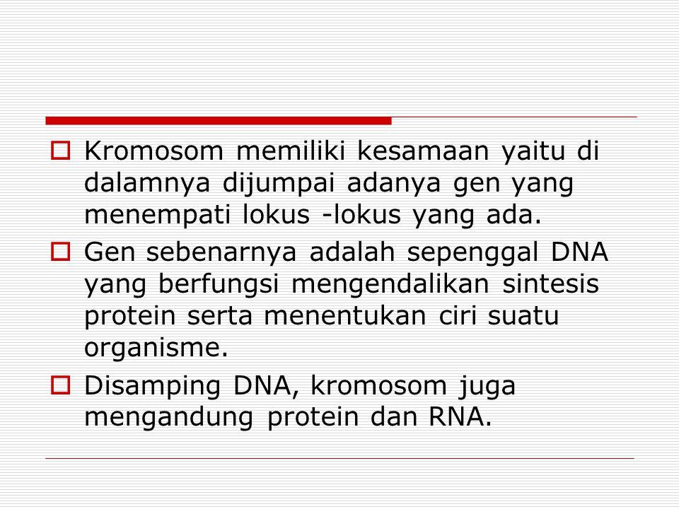 Keterangan bentuk kromosom (1)  Metasentrik, yaitu : sentromer terletak di tengah, bentuknya menyerupai huruf V  Submetasentrik, yaitu : letak sentromer mengarah ke salah satu ujung kromosom, bentuknya seperti huruf J