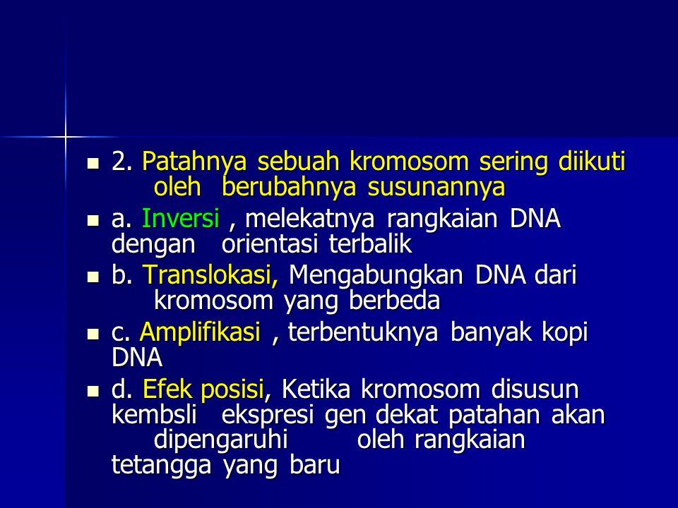 2. Patahnya sebuah kromosom sering diikuti oleh berubahnya susunannya 2. Patahnya sebuah kromosom sering diikuti oleh berubahnya susunannya a. Inversi