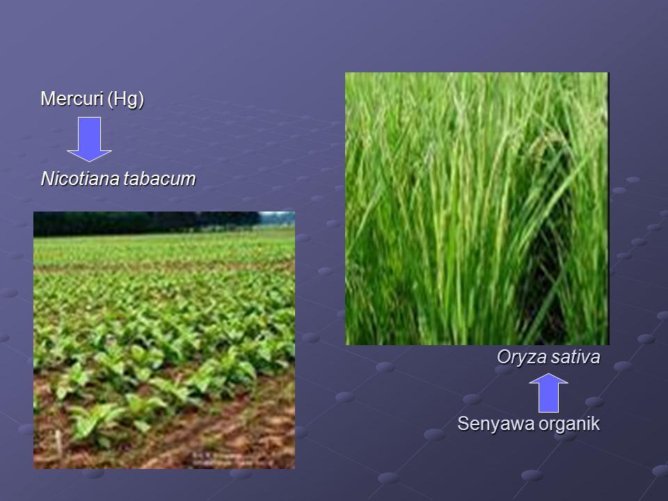 Oryza sativa Senyawa organik Mercuri (Hg) Nicotiana tabacum