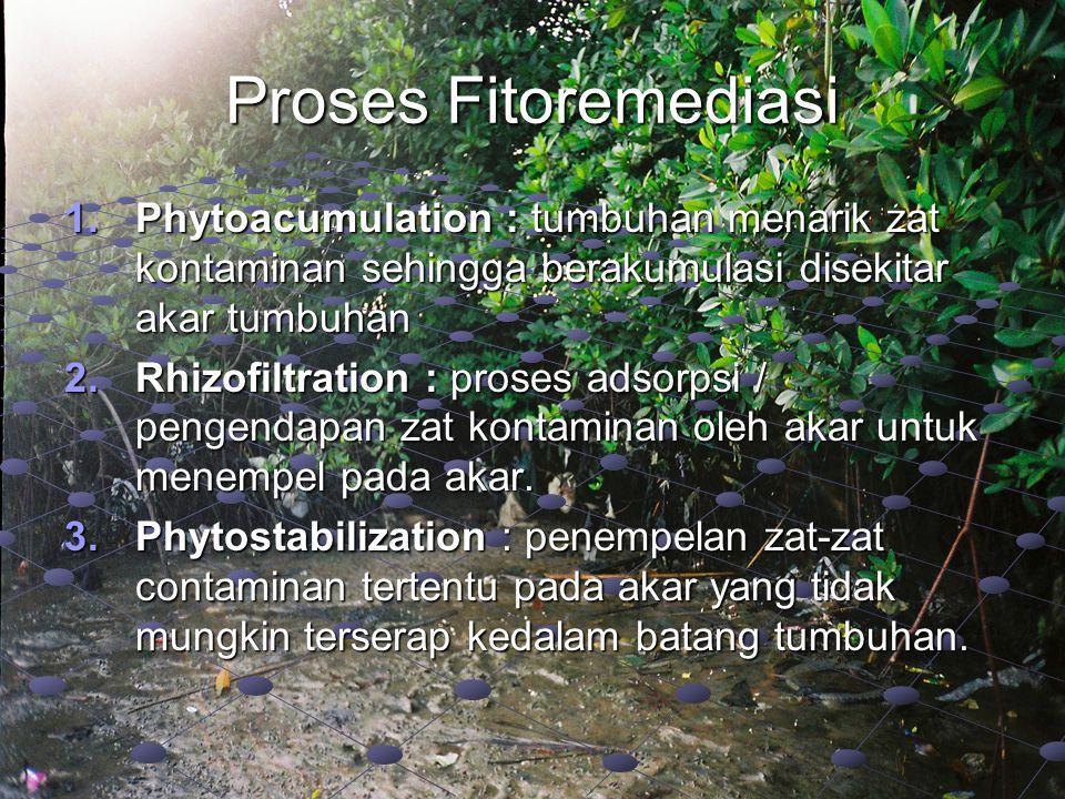 Proses Fitoremediasi 1.Phytoacumulation : tumbuhan menarik zat kontaminan sehingga berakumulasi disekitar akar tumbuhan 2.Rhizofiltration : proses ads