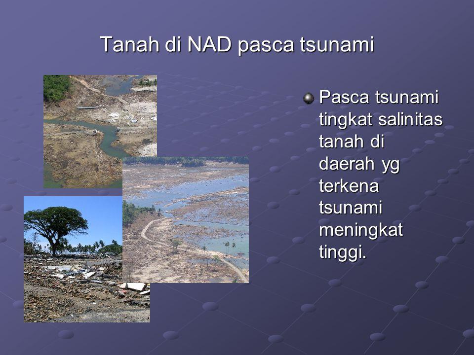 Tanah di NAD pasca tsunami Pasca tsunami tingkat salinitas tanah di daerah yg terkena tsunami meningkat tinggi.