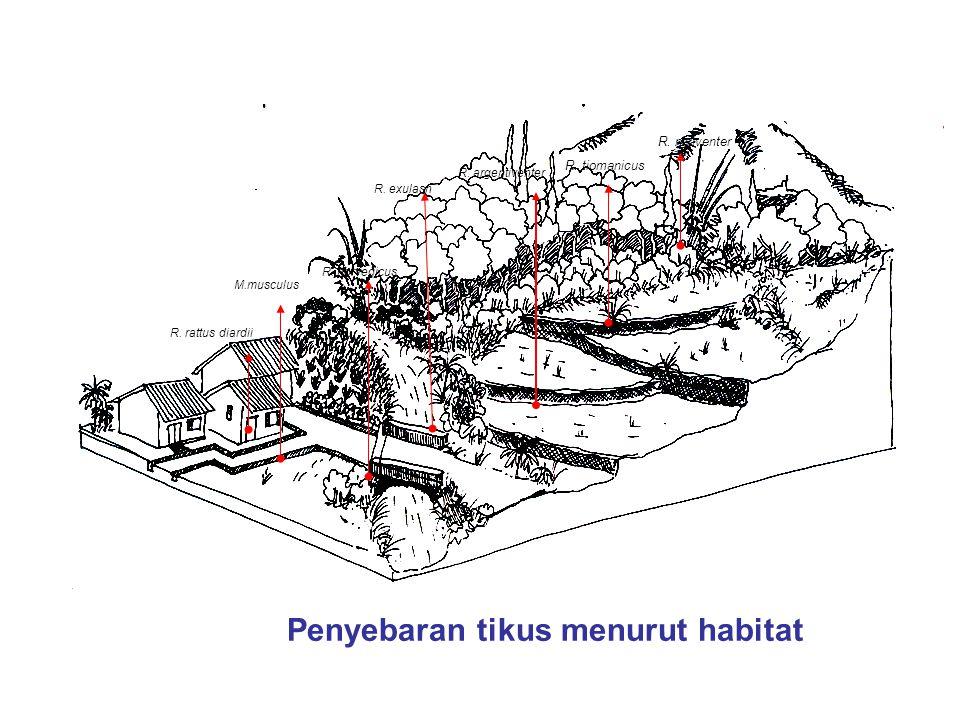 M.musculus R. rattus diardii R. norvegicus R. exulasn R. argentiventer R. tiomanicus R. niviventer Penyebaran tikus menurut habitat