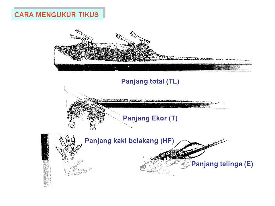 Panjang total (TL) Panjang Ekor (T) Panjang kaki belakang (HF) Panjang telinga (E) CARA MENGUKUR TIKUS