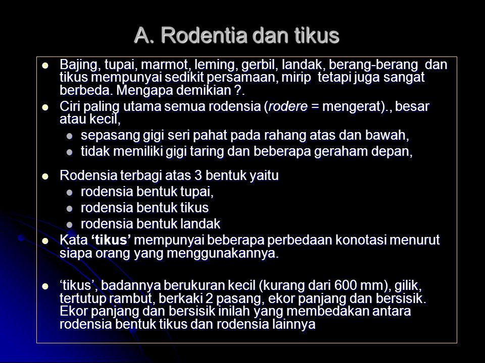 Keterangan Tikus got R.norvegicus Tikus rumah R.