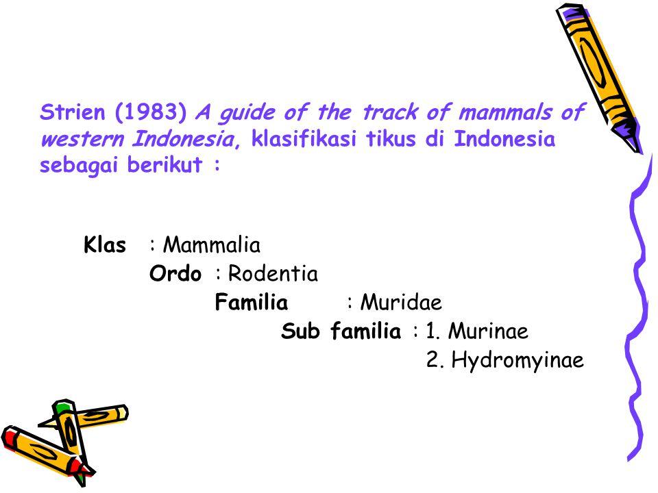 Genera dari Murinae, Genera dari Hydromyinae 1.Pitchier (1 jenis),20.Pogonomelomys (4 jenis)1.Hydromys (3 jenis) 2.Hyomis ( 1 jenis),21.Uromys (2 jenis)2.Crossomys (1 jenis) 3.Conilurus (1 jenis),22.Xenuromys (1 jenis)3.Neohydromys (1 jenis), 4.Eropeplus (1 jenis),23.Haeromys (3 jenis)4.Neopaldomys (1 jenis) 5.Sundomys (3 jenis),24.Mus (7 jenis)5.Mayermys (1 jenis) 6.Rattus (35 jenis)25.Crunomys (1 jenis)6.Pseudohydromys (2 jenis 7.Berylmis (1 jenis)26.Macruromys (2 jenis)7.Paraleptomys (2 jenis), 8.Komodomys ( 1 jenis),27.Lorentzimys (1 jenis)8.Microhydromys (1 jenis) 9.Kadarsonomys( 1jenis)28.Echiothryx (1 jenis)9.Parahydromys (1 jenis) 10.Palawanomys ( 1jenis),29.Melasmothryx (1 jenis)10.Leptomys (1 jenis) 11.Niviventer (4 jenis),30.Bandicota (2 jenis) 12.Leopaldomys (3 jenis)31.Tateomys (2 jenis) 13.Margaretamys (3 jenis)32.Pagonomys (3 jenis) 14.Bunomys (4 jenis)33.Anysomys (1 jenis) 15.Peruromys (1 jenis)34.Chiruromys (3 jenis) 16.Teoromys (6 jenis)35.Chiropodomys (5 jenis) 17.Lenothrix (1 jenis)36.Mallomys ( 1 jenis) 18.Maxomys (14 jenis)37.Papagomys ( 1jenis) 19.Pseudomys (1 jenis)