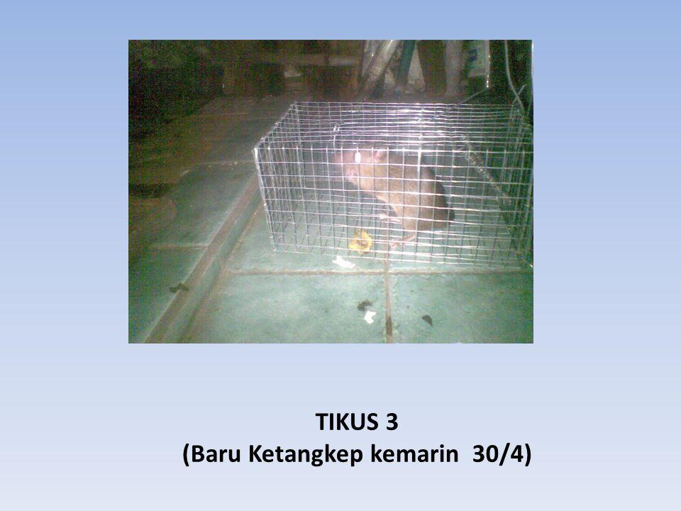 TIKUS 3 (Baru Ketangkep kemarin 30/4)