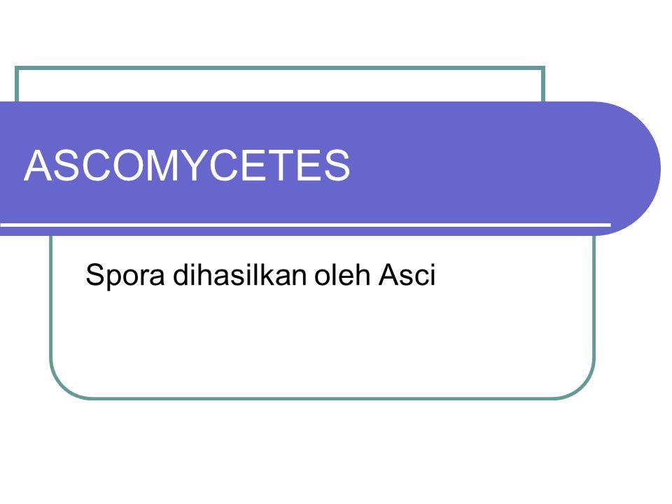 Ciri-ciri umum Ascomycetes Vegetatif miselium berseptat, haploid Sexual propagasi, terjadi dari kariogami 2 inti nukleus dari gametangia berbeda (male: antheridium, female: ascogonium) Sesudah meiosis terbentuk 8 (kadang 2 atau 4) ascospora Asci berisi ascospora biasanya terbungkus dalam ascomata(ascocarp) Asci juga dapat dihasilkan oleh pseudithecia