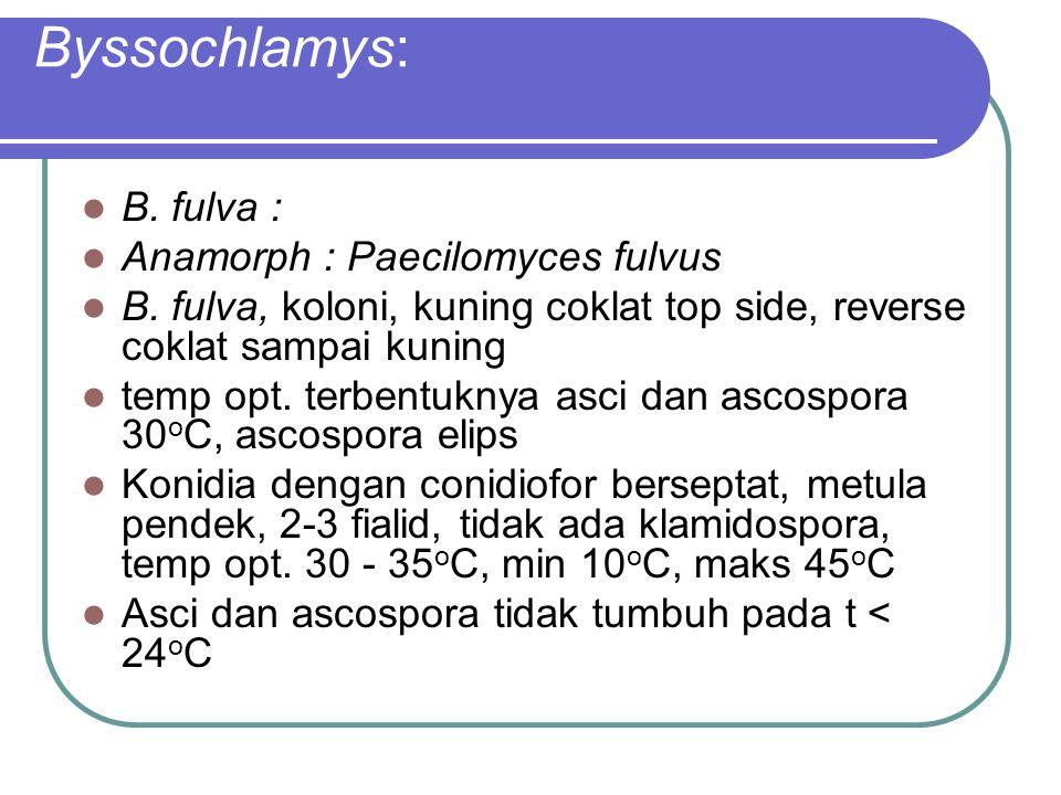 Byssochlamys: B. fulva : Anamorph : Paecilomyces fulvus B. fulva, koloni, kuning coklat top side, reverse coklat sampai kuning temp opt. terbentuknya