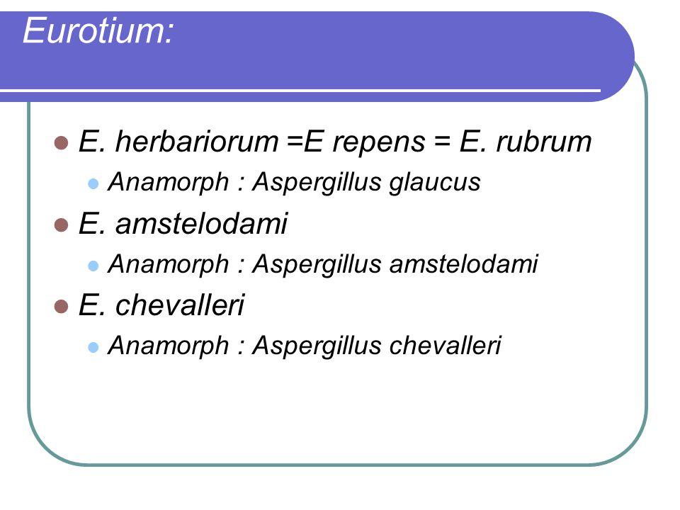Eurotium: E. herbariorum =E repens = E. rubrum Anamorph : Aspergillus glaucus E. amstelodami Anamorph : Aspergillus amstelodami E. chevalleri Anamorph