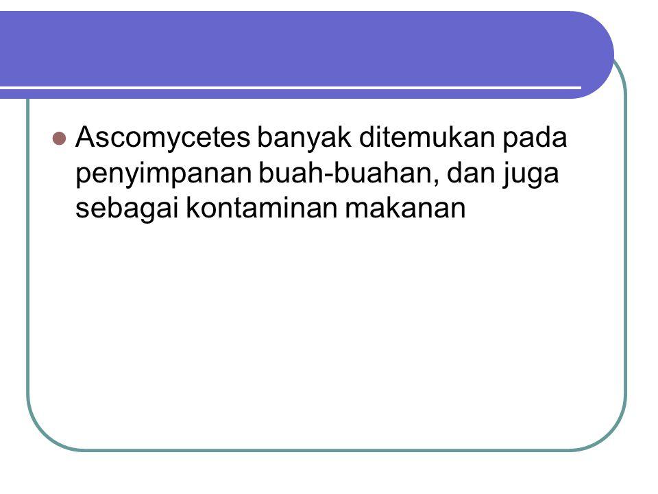 Ascomycetes banyak ditemukan pada penyimpanan buah-buahan, dan juga sebagai kontaminan makanan