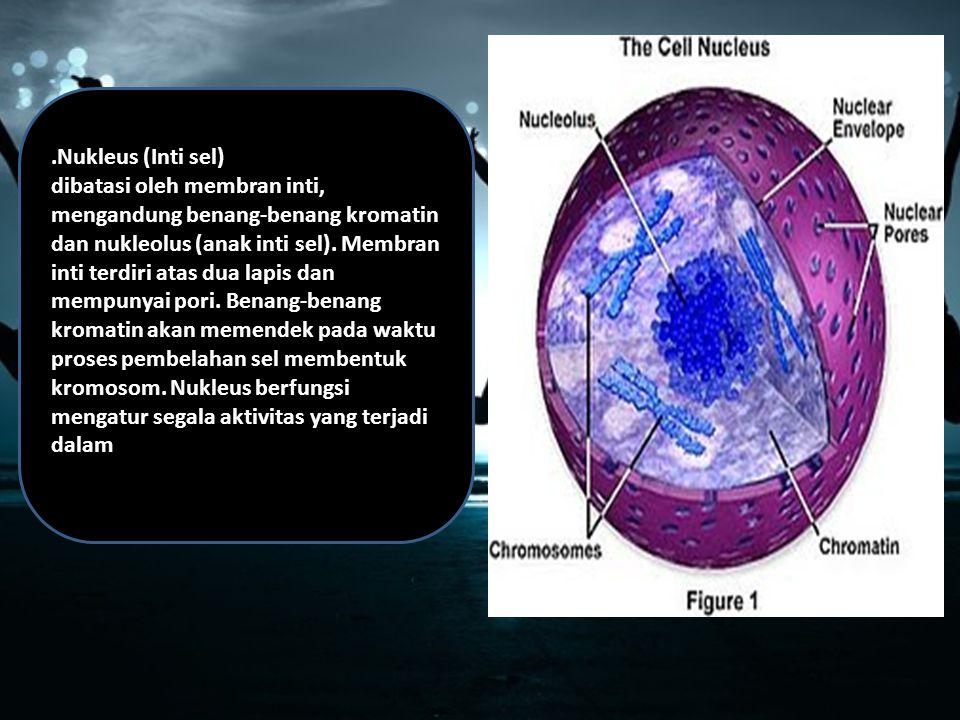 .Nukleus (Inti sel) dibatasi oleh membran inti, mengandung benang-benang kromatin dan nukleolus (anak inti sel).