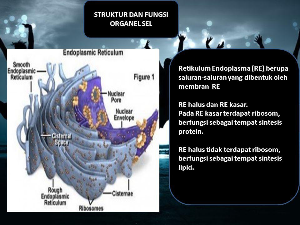 STRUKTUR DAN FUNGSI ORGANEL SEL Retikulum Endoplasma (RE) berupa saluran-saluran yang dibentuk oleh membran RE RE halus dan RE kasar.