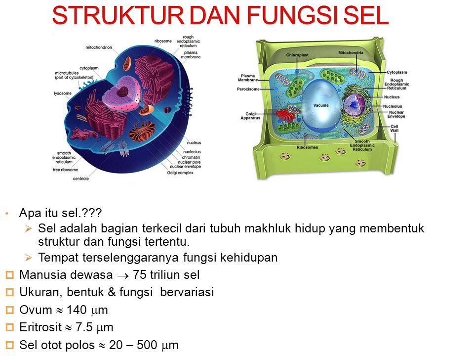 Apa itu sel.???  Sel adalah bagian terkecil dari tubuh makhluk hidup yang membentuk struktur dan fungsi tertentu.  Tempat terselenggaranya fungsi ke