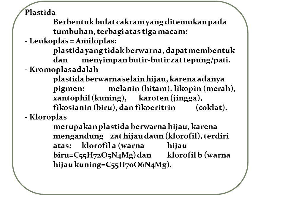 Plastida Berbentuk bulat cakram yang ditemukan pada tumbuhan, terbagi atas tiga macam: - Leukoplas = Amiloplas: plastida yang tidak berwarna, dapat me