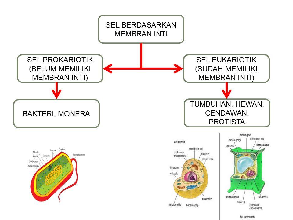 Membran inti : Eukariot memiliki membran inti sedangkan prokariot tidak.