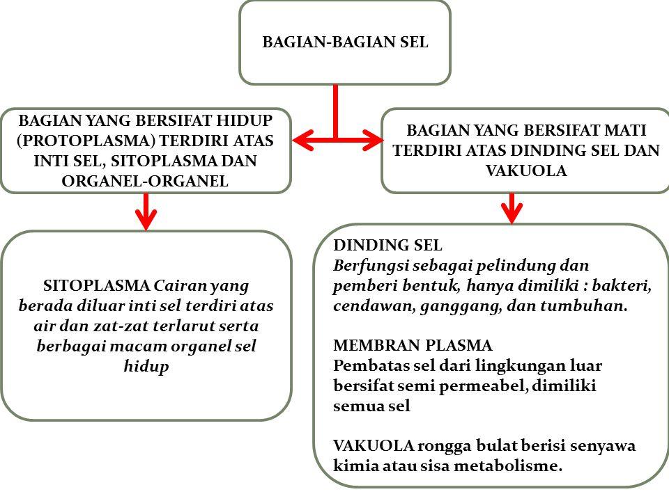 BAGIAN-BAGIAN SEL BAGIAN YANG BERSIFAT HIDUP (PROTOPLASMA) TERDIRI ATAS INTI SEL, SITOPLASMA DAN ORGANEL-ORGANEL BAGIAN YANG BERSIFAT MATI TERDIRI ATA
