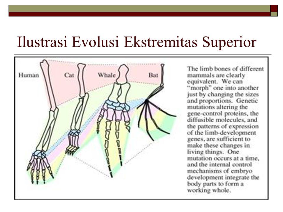 Ilustrasi Evolusi Ekstremitas Superior