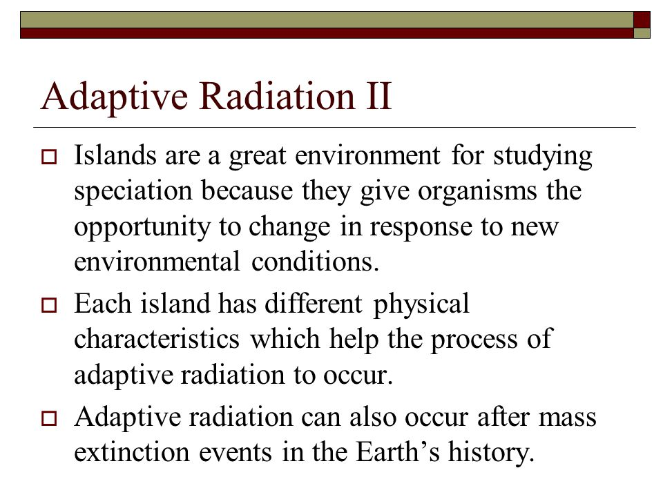 Adaptive Radiation II  Islands are a great environment for studying speciation because they give organisms the opportunity to change in response to n