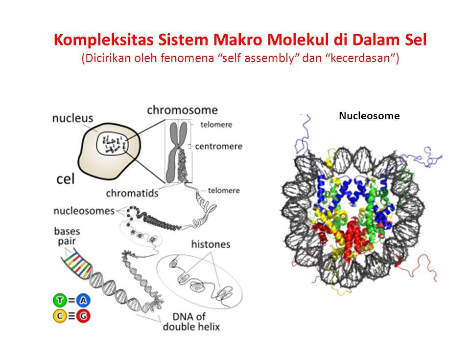 Nucleosome Kompleksitas Sistem Makro Molekul di Dalam Sel (Dicirikan oleh fenomena self assembly dan kecerdasan )