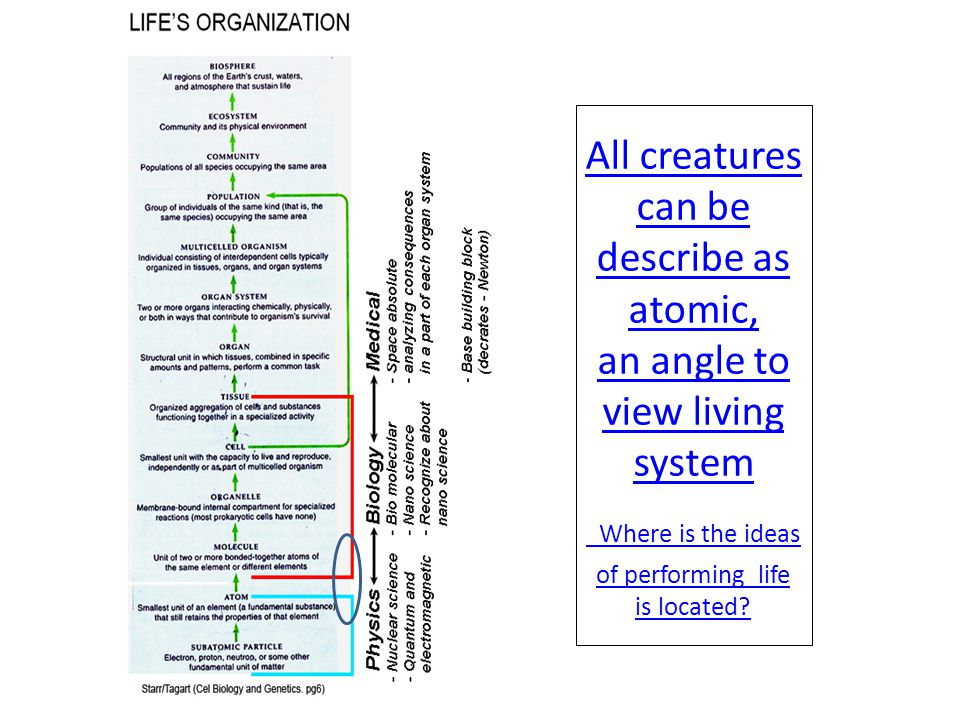 All creatures can be describe as atomic, an angle to view living system Where is the ideas of performing life is located?