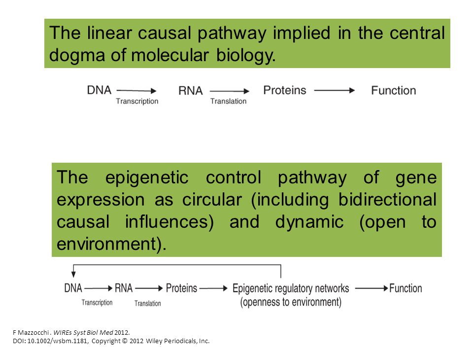 The linear causal pathway implied in the central dogma of molecular biology. F Mazzocchi. WIREs Syst Biol Med 2012. DOI: 10.1002/wsbm.1181, Copyright