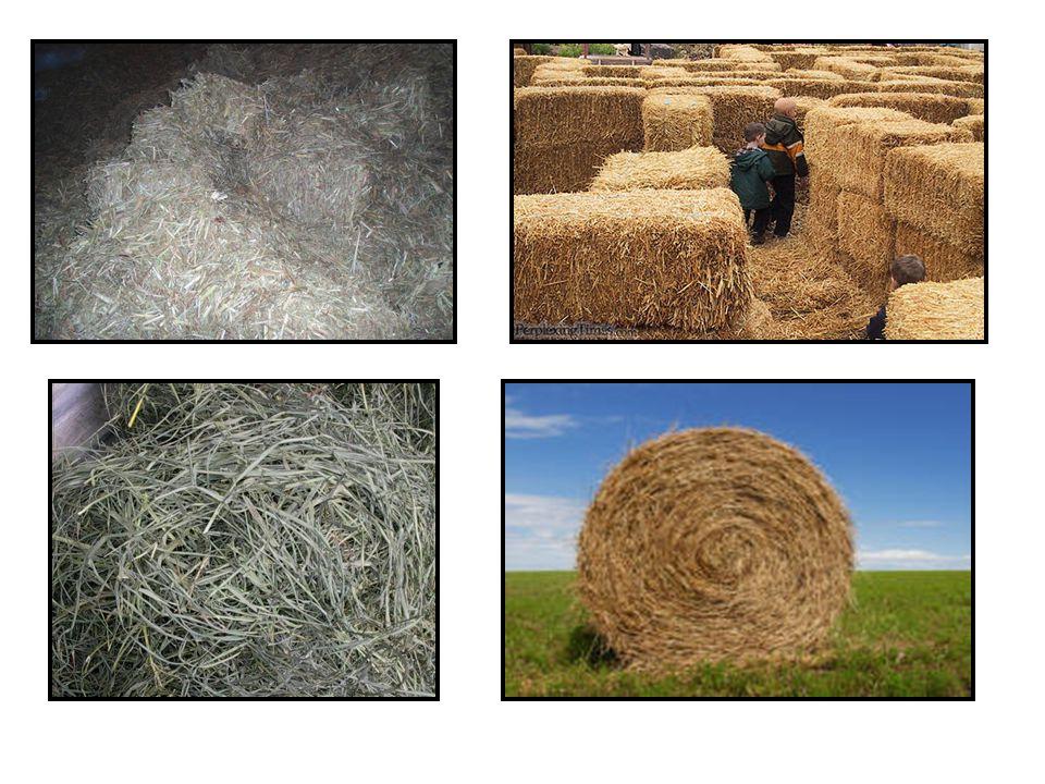 Aroma hay juga dapat menunjukkan kualitas, hay berjamur atau busuk menimbulkan bau apek yang mengurangi palatabilitas atau nilai nutrisinya.