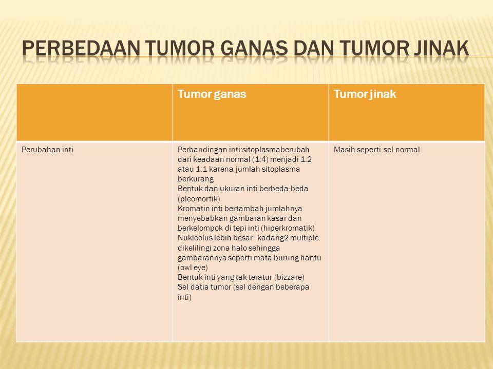 Tumor ganasTumor jinak Perubahan intiPerbandingan inti:sitoplasmaberubah dari keadaan normal (1:4) menjadi 1:2 atau 1:1 karena jumlah sitoplasma berku