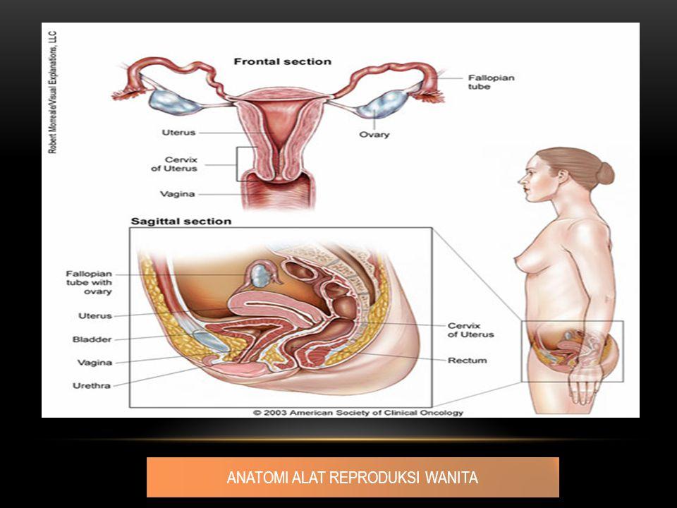 Gambaran Klinik : Getah yang keluar dari vagina makin lama akan berbau busuk pertumbuhan tumor menjadi ulceratif perdarahan kontak Rasa nyeri akibat infiltrasi sel tumor ke serabut saraf Diagnosis pasti : pemeriksaan histologik dari jaringan yang diperoleh dengan melakukan biopsi (targeted biopsy).