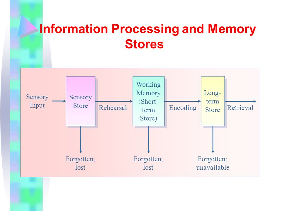 Information Processing and Memory Stores Sensory Store Working Memory (Short- term Store) Long- term Store Sensory Input RehearsalEncodingRetrieval Forgotten; lost Forgotten; lost Forgotten; unavailable