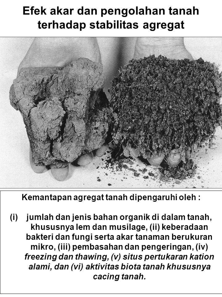 Efek akar dan pengolahan tanah terhadap stabilitas agregat Kemantapan agregat tanah dipengaruhi oleh : (i)jumlah dan jenis bahan organik di dalam tana